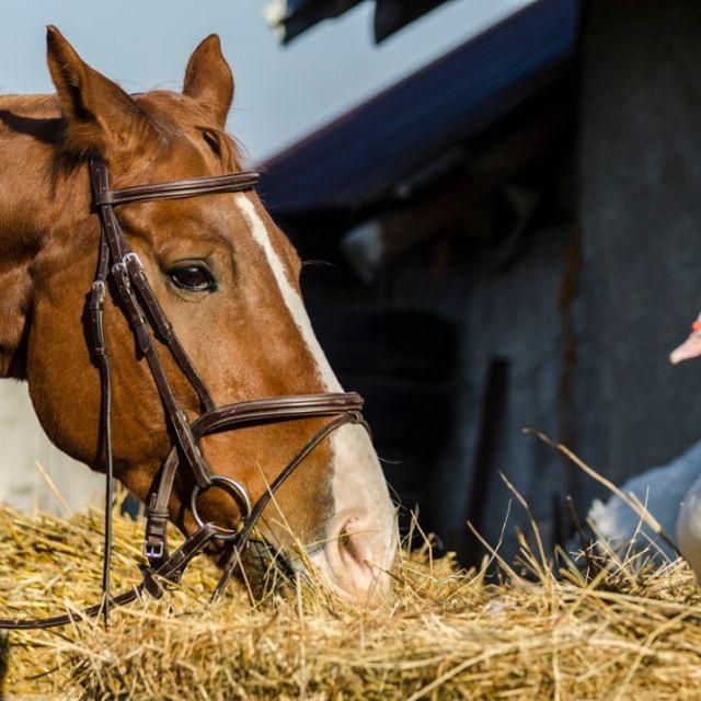 Najlepšie tipy na kŕmenie koňa v jarnom období